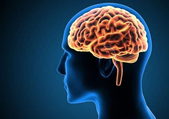 brain of pre-conscious